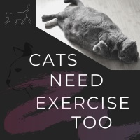 Cats need exercise too Natural CLimbers cat trees
